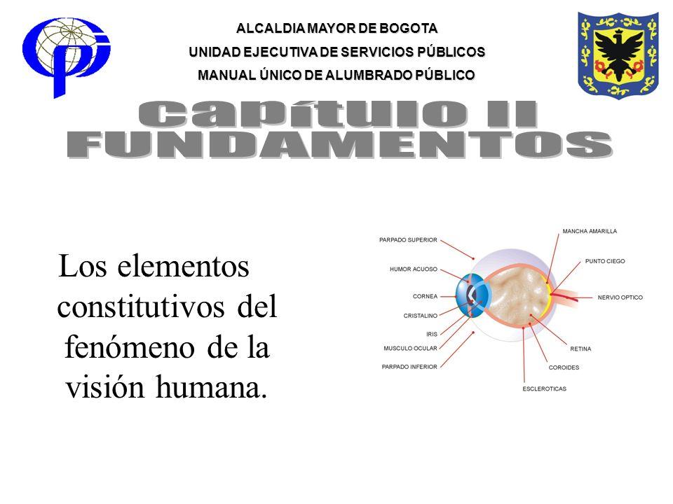 Los elementos constitutivos del fenómeno de la visión humana.