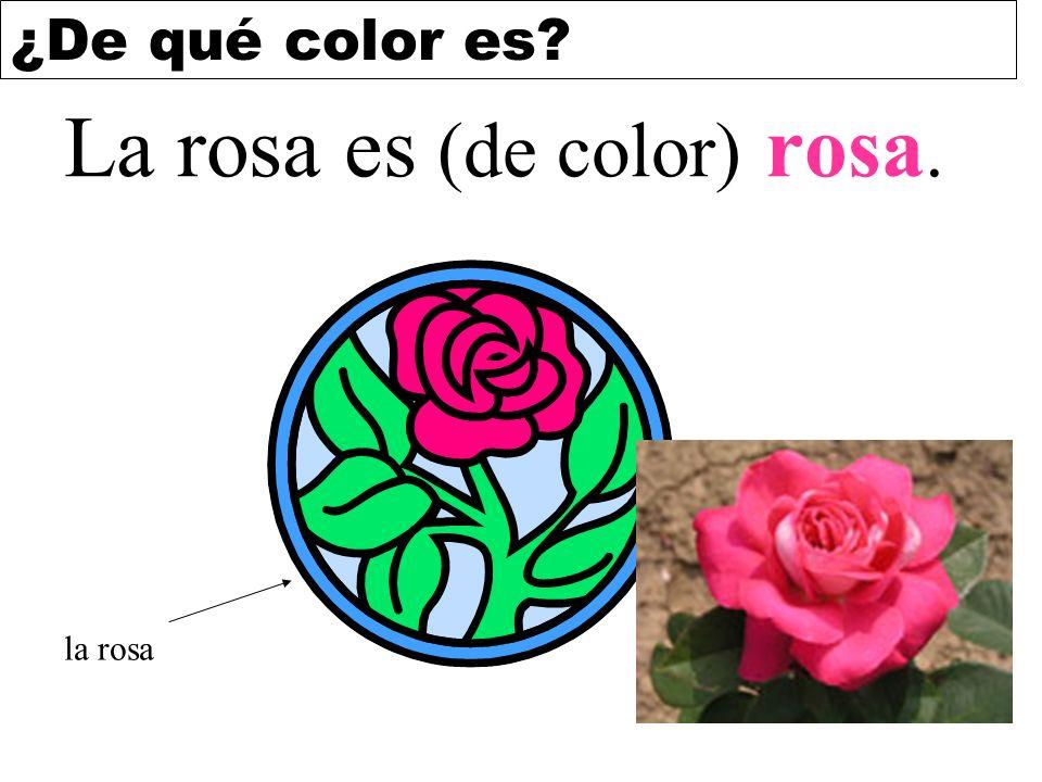 La rosa es (de color) rosa.