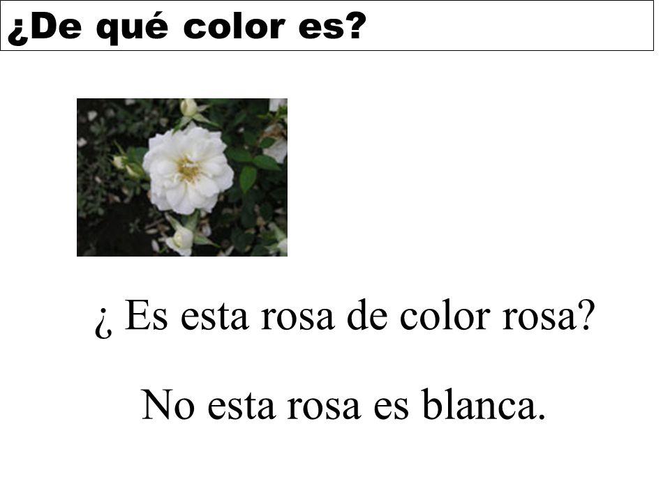 ¿ Es esta rosa de color rosa