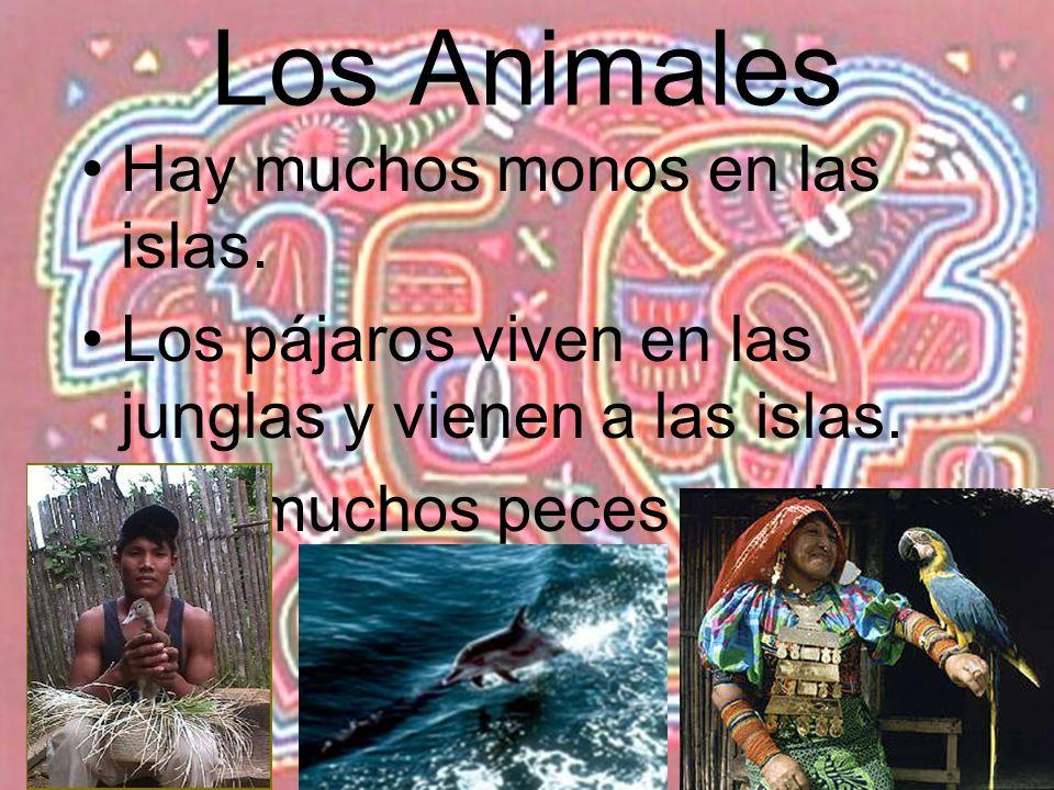 Los Animales Hay muchos monos en las islas.