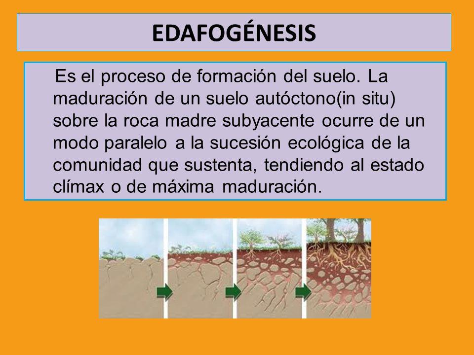 Ciencias de la tierra y medioambientales profesora for Proceso de formacion del suelo