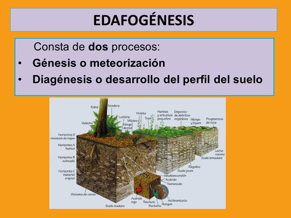 EDAFOGÉNESIS Consta de dos procesos: Génesis o meteorización