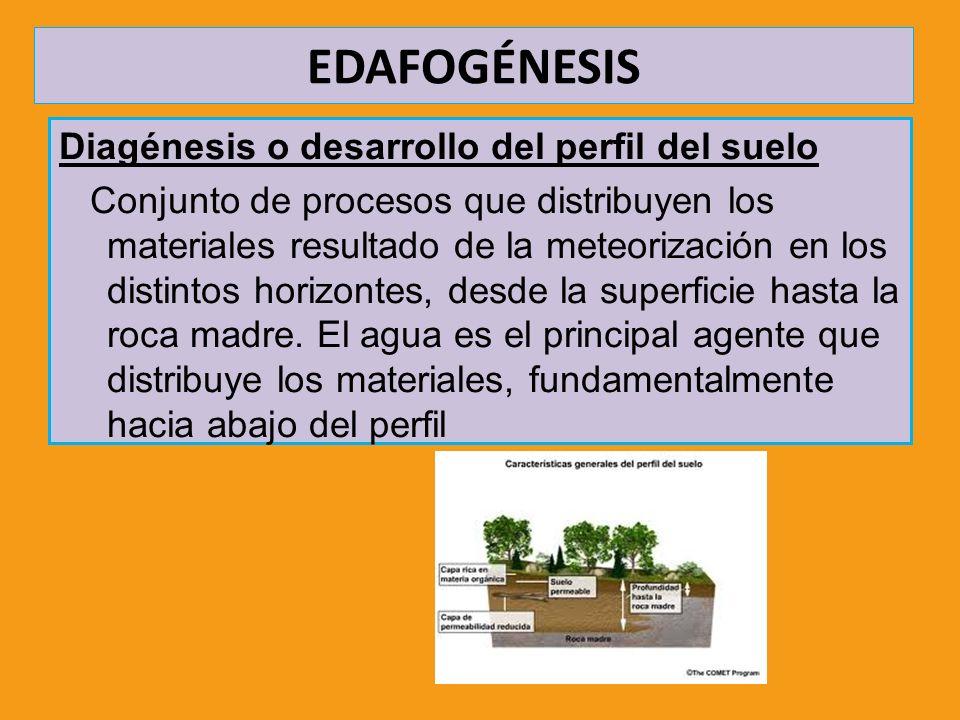 EDAFOGÉNESIS Diagénesis o desarrollo del perfil del suelo