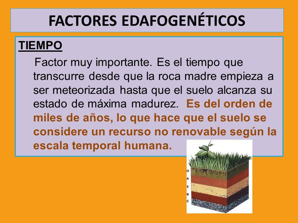 FACTORES EDAFOGENÉTICOS