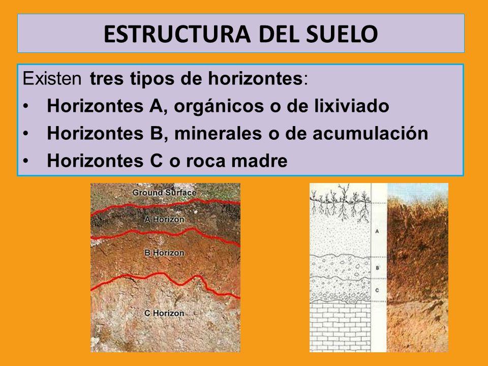 ESTRUCTURA DEL SUELO Existen tres tipos de horizontes: