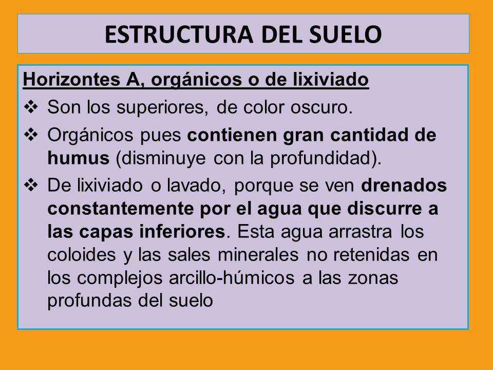 ESTRUCTURA DEL SUELO Horizontes A, orgánicos o de lixiviado