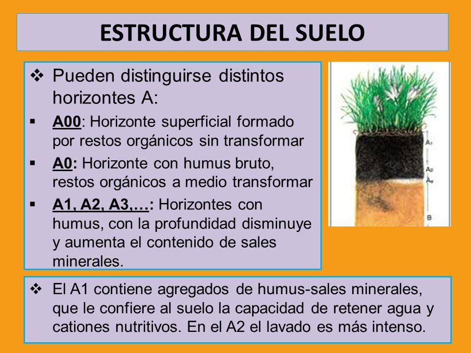 ESTRUCTURA DEL SUELO Pueden distinguirse distintos horizontes A: