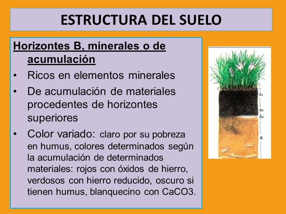 ESTRUCTURA DEL SUELO Horizontes B, minerales o de acumulación