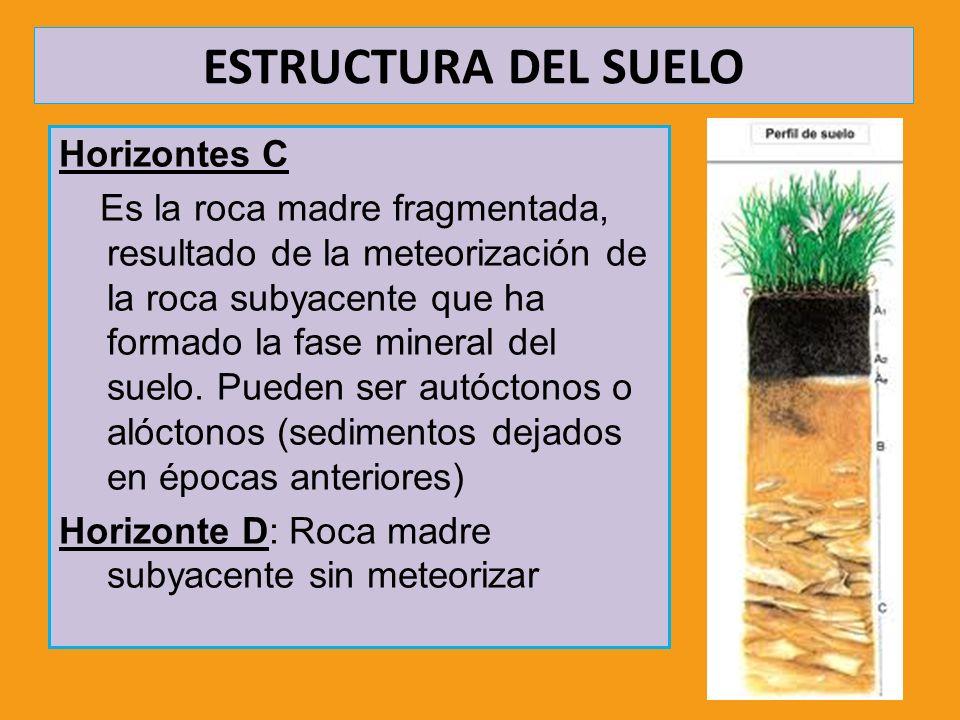 ESTRUCTURA DEL SUELO Horizontes C