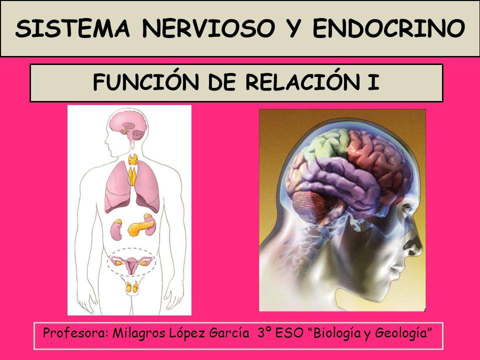 Profesora: Milagros López García 3º ESO Biología y Geología