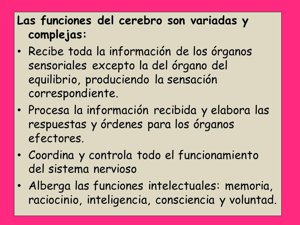 Las funciones del cerebro son variadas y complejas: