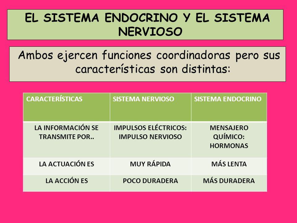 EL SISTEMA ENDOCRINO Y EL SISTEMA NERVIOSO