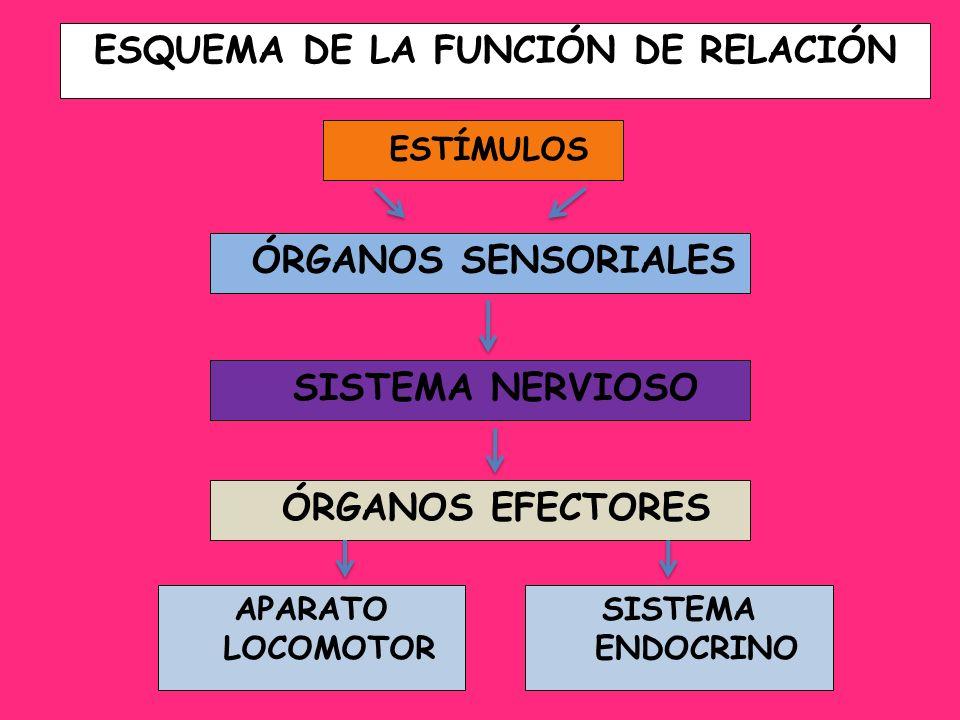 ESQUEMA DE LA FUNCIÓN DE RELACIÓN