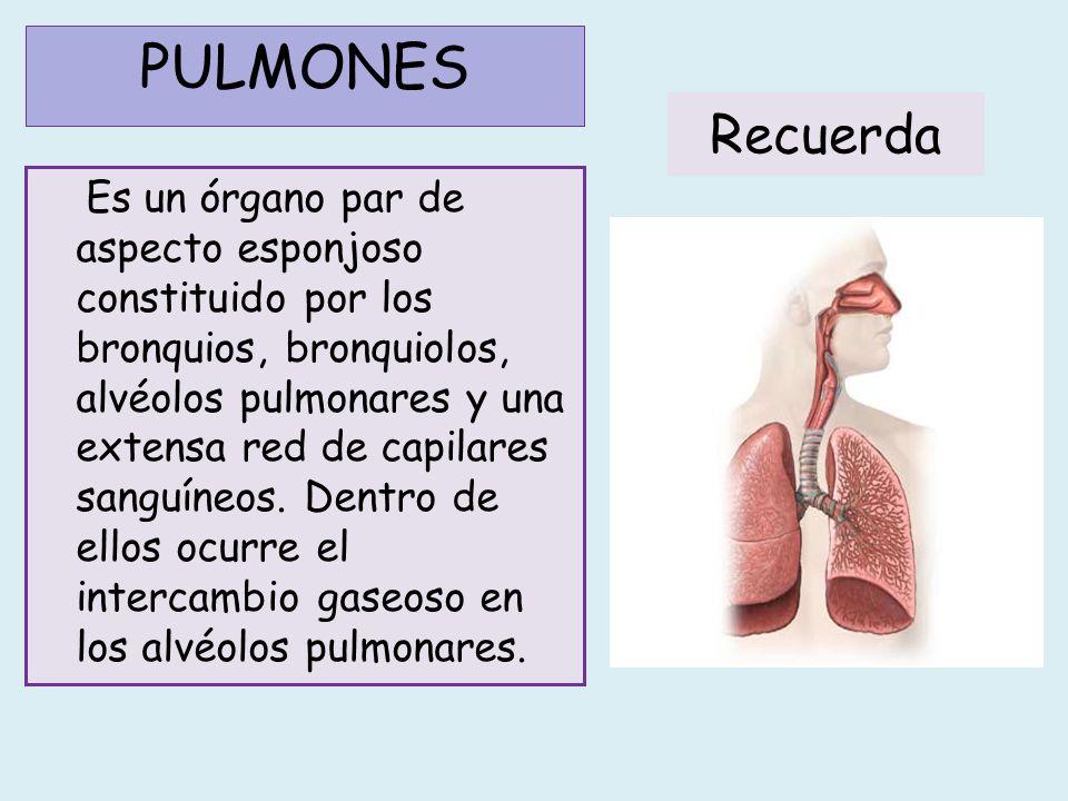 PULMONES Recuerda.