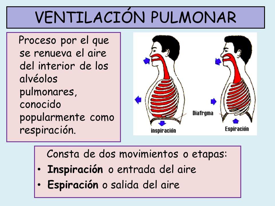 VENTILACIÓN PULMONAR Proceso por el que se renueva el aire del interior de los alvéolos pulmonares, conocido popularmente como respiración.