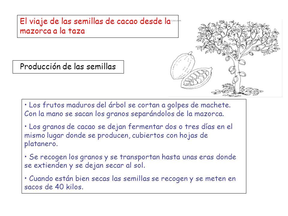 Producción de las semillas