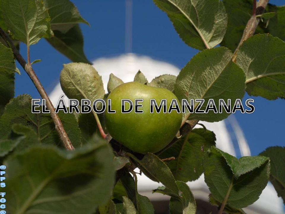 EL ÁRBOL DE MANZANAS ©PPS TOC®