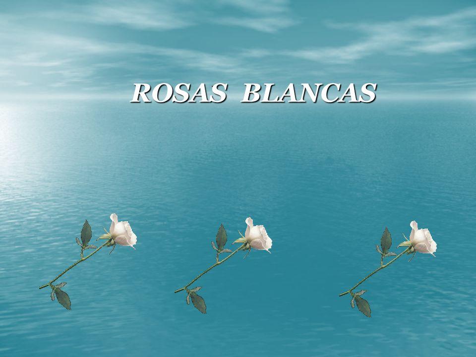 . ROSAS BLANCAS