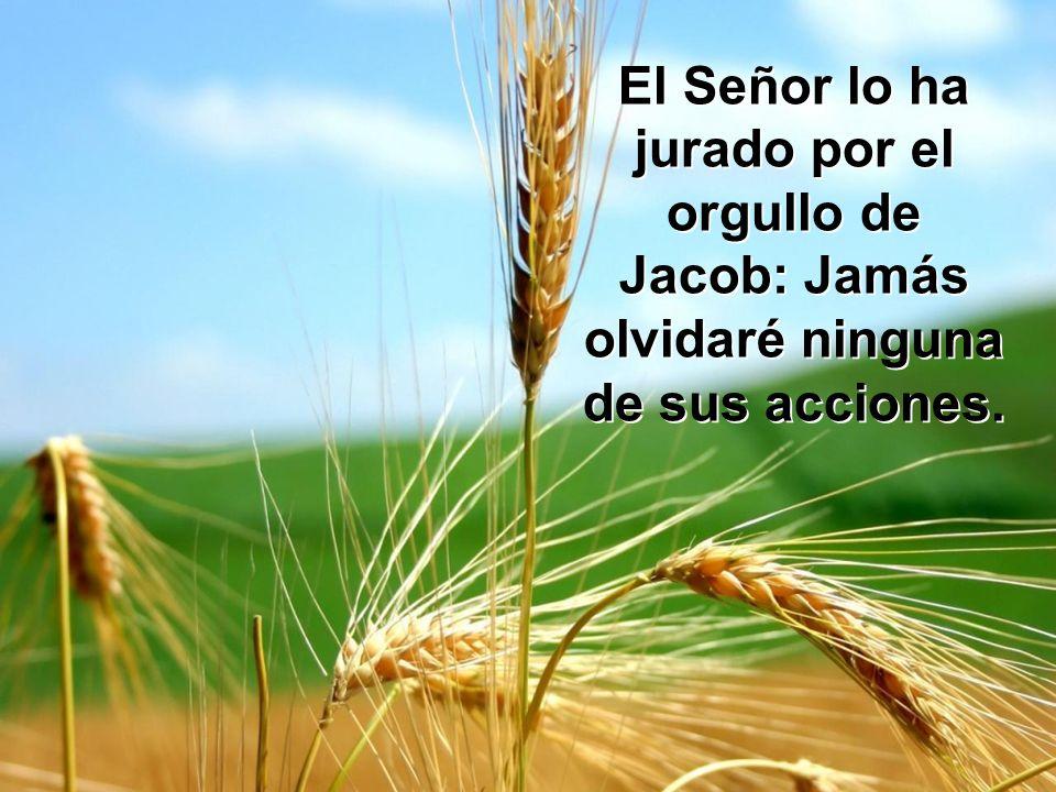 El Señor lo ha jurado por el orgullo de Jacob: Jamás olvidaré ninguna de sus acciones.