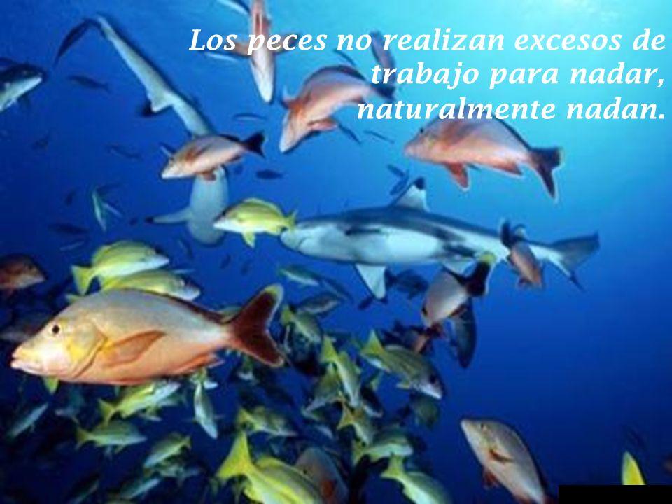 Los peces no realizan excesos de trabajo para nadar,