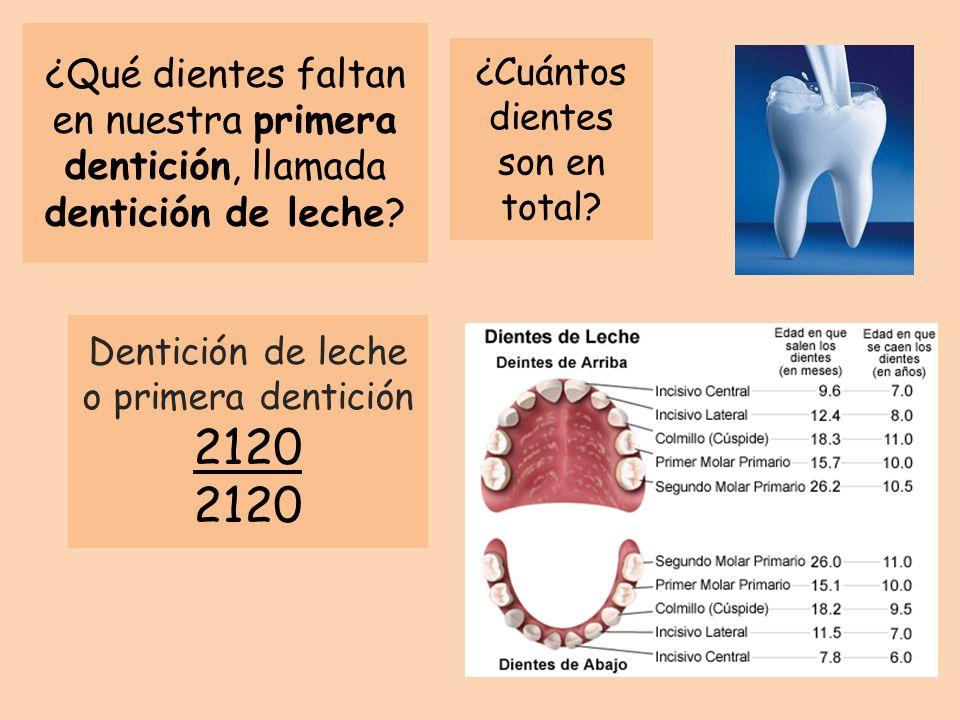 ¿Qué dientes faltan en nuestra primera dentición, llamada dentición de leche