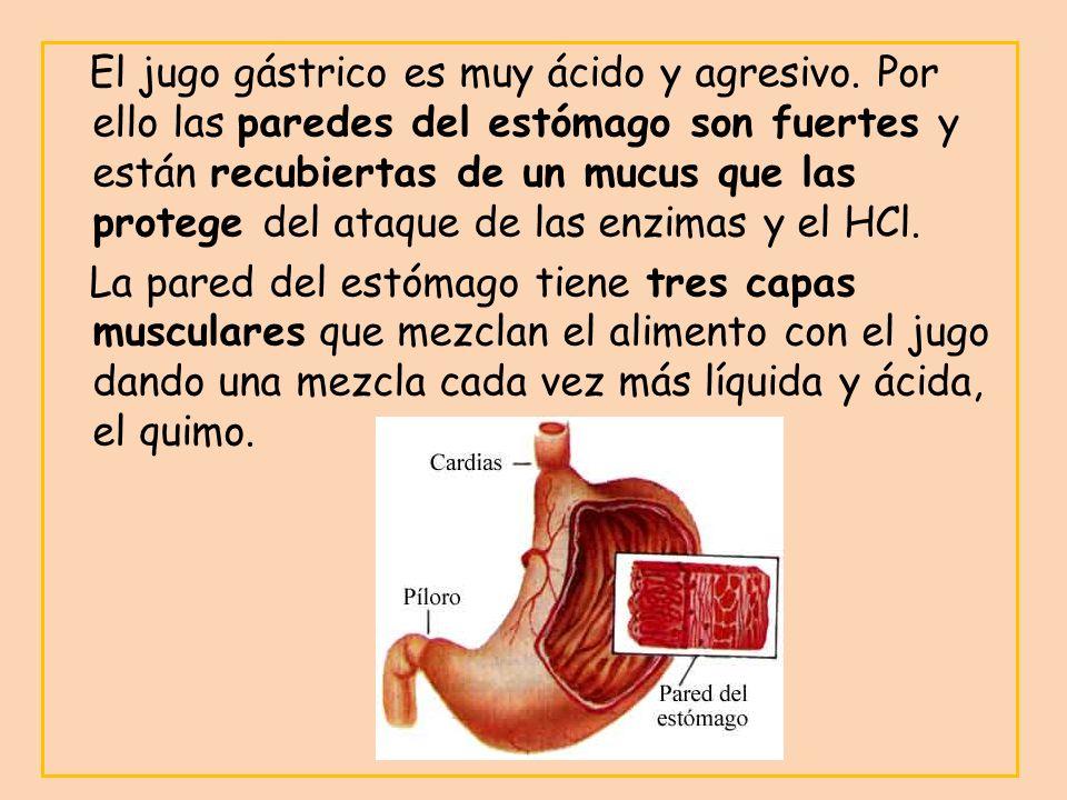 El jugo gástrico es muy ácido y agresivo