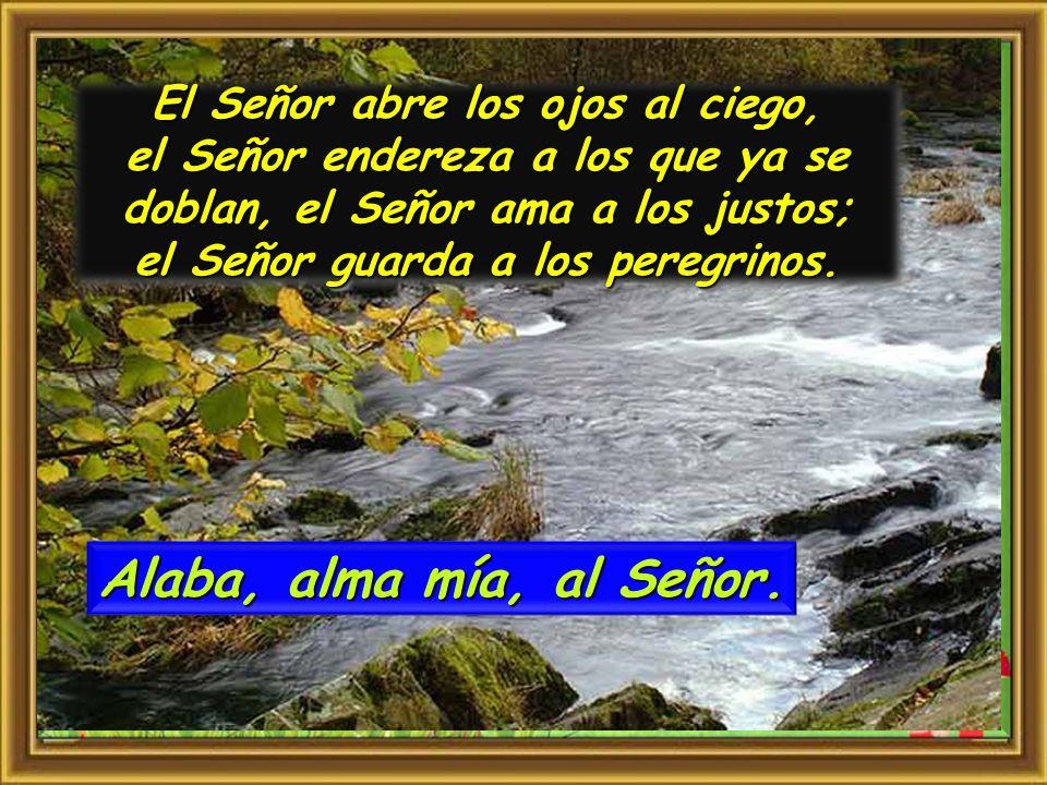 El Señor abre los ojos al ciego, el Señor endereza a los que ya se doblan, el Señor ama a los justos; el Señor guarda a los peregrinos.
