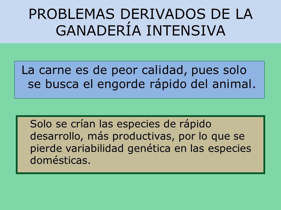 PROBLEMAS DERIVADOS DE LA GANADERÍA INTENSIVA