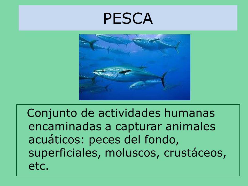 PESCAConjunto de actividades humanas encaminadas a capturar animales acuáticos: peces del fondo, superficiales, moluscos, crustáceos, etc.
