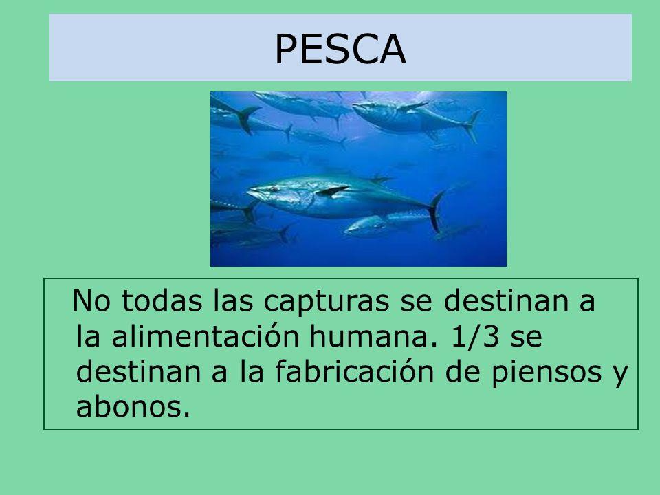 PESCA No todas las capturas se destinan a la alimentación humana.