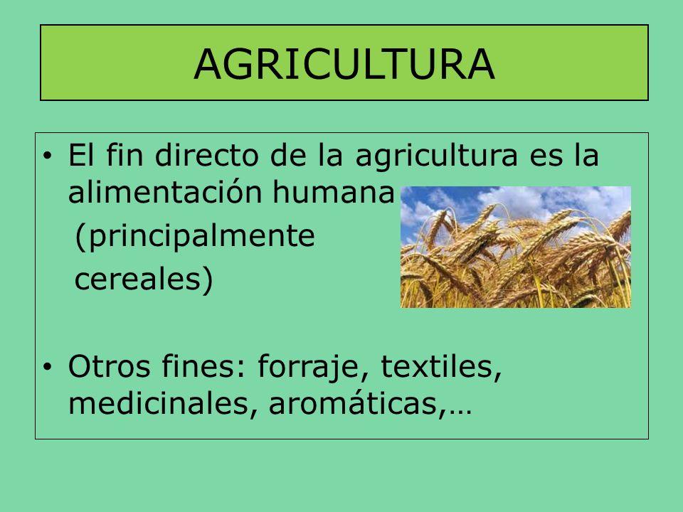 AGRICULTURA El fin directo de la agricultura es la alimentación humana