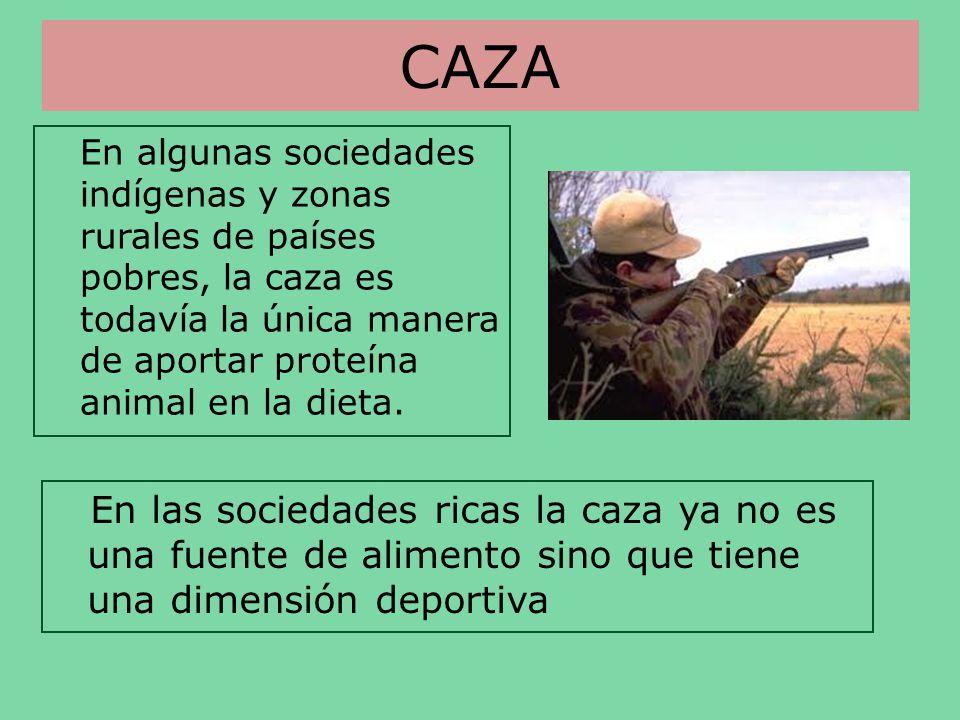CAZA En algunas sociedades indígenas y zonas rurales de países pobres, la caza es todavía la única manera de aportar proteína animal en la dieta.