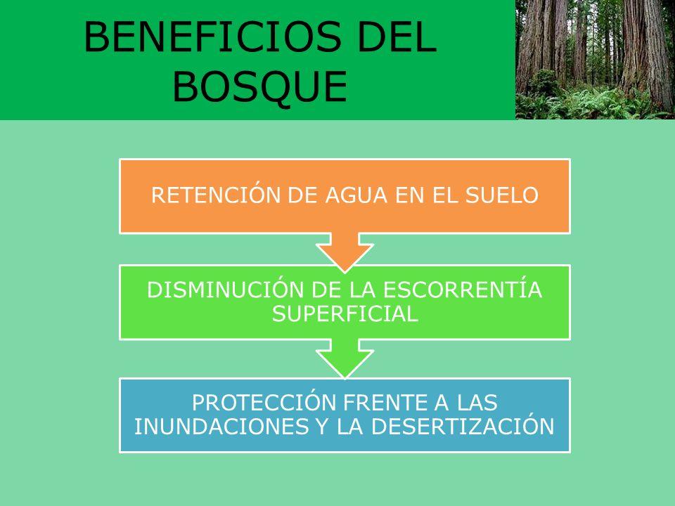 BENEFICIOS DEL BOSQUE RETENCIÓN DE AGUA EN EL SUELO