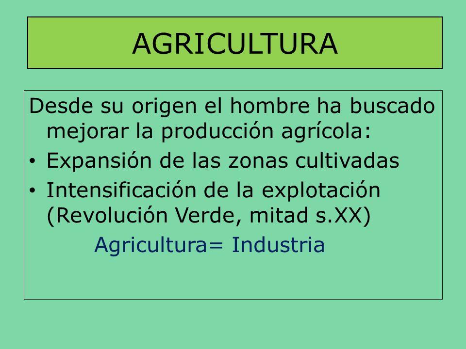AGRICULTURADesde su origen el hombre ha buscado mejorar la producción agrícola: Expansión de las zonas cultivadas.