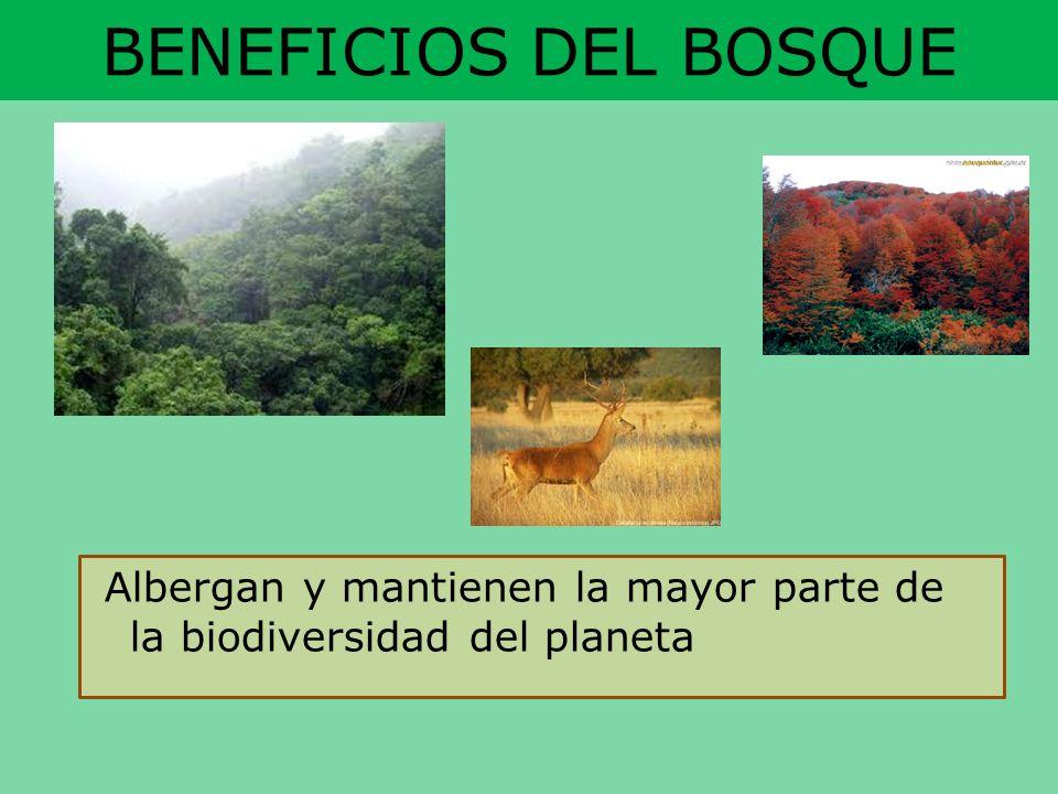 BENEFICIOS DEL BOSQUE Albergan y mantienen la mayor parte de la biodiversidad del planeta