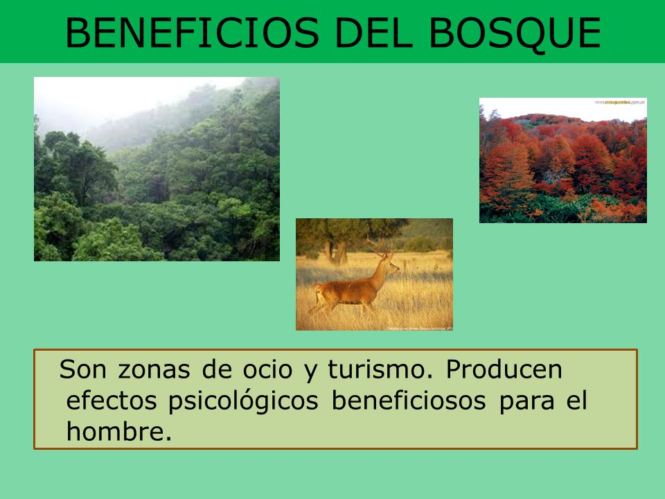 BENEFICIOS DEL BOSQUE Son zonas de ocio y turismo.