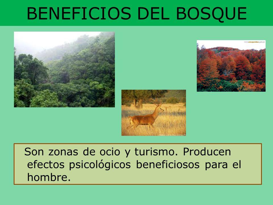 BENEFICIOS DEL BOSQUESon zonas de ocio y turismo.