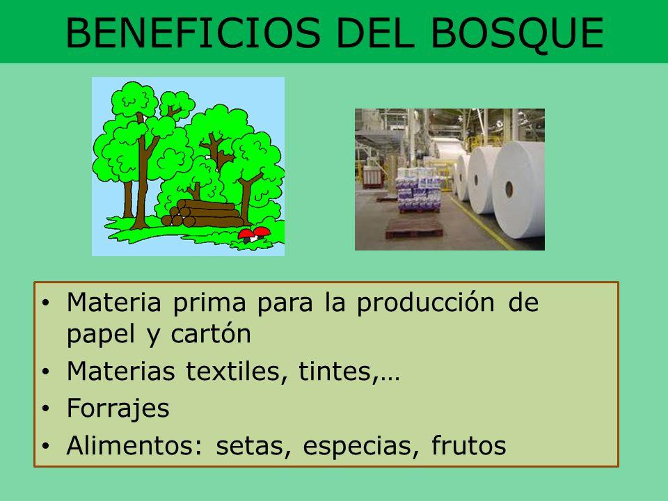 BENEFICIOS DEL BOSQUE Materia prima para la producción de papel y cartón. Materias textiles, tintes,…