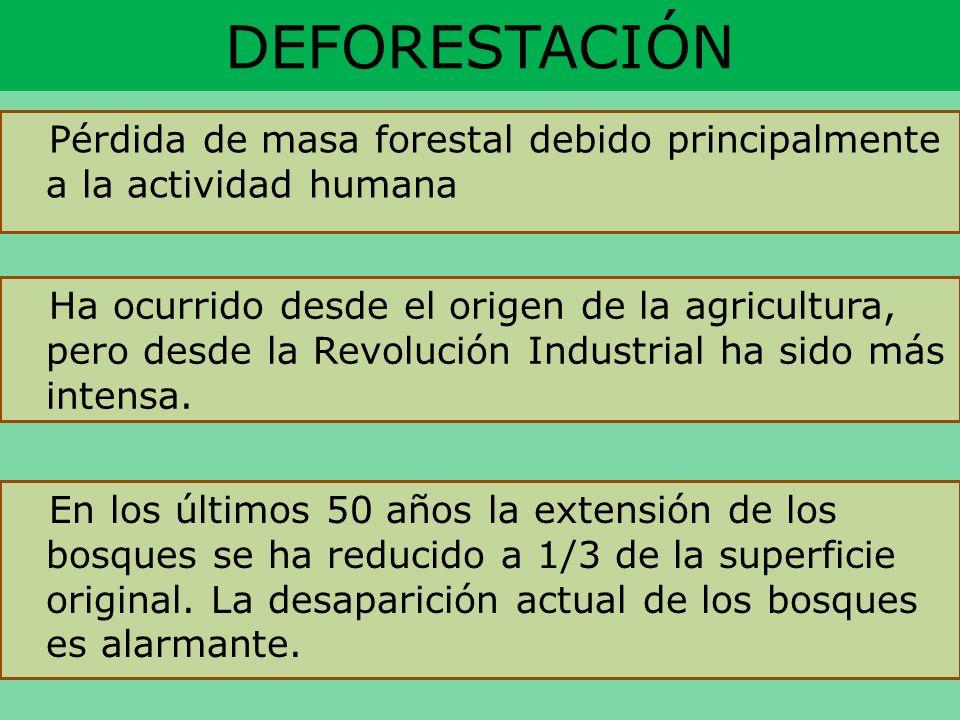 DEFORESTACIÓNPérdida de masa forestal debido principalmente a la actividad humana.