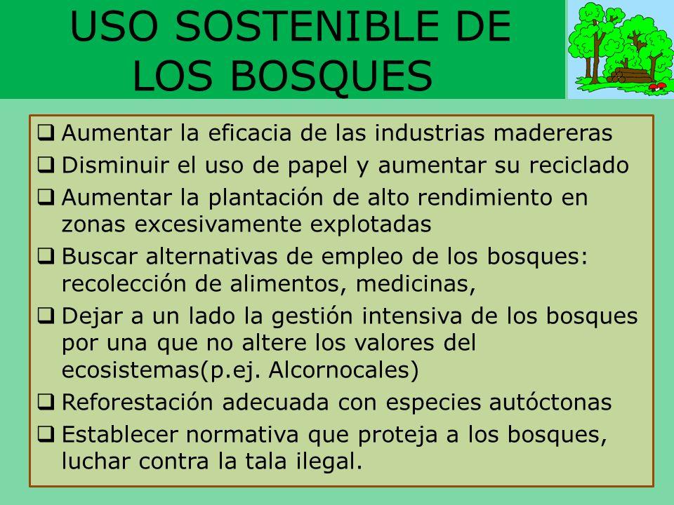 USO SOSTENIBLE DE LOS BOSQUES