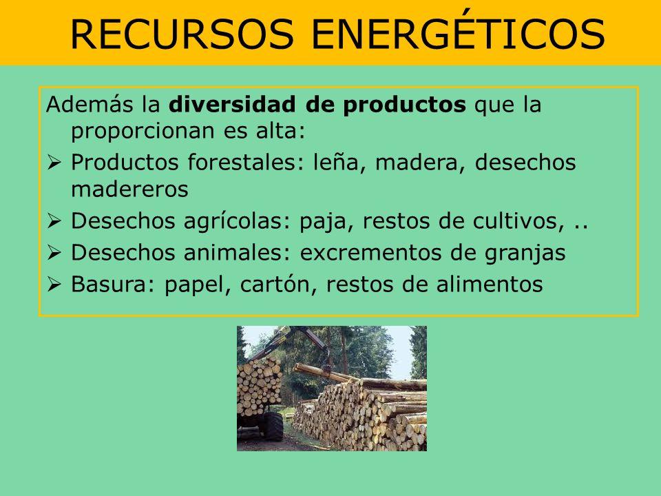 RECURSOS ENERGÉTICOS Además la diversidad de productos que la proporcionan es alta: Productos forestales: leña, madera, desechos madereros.