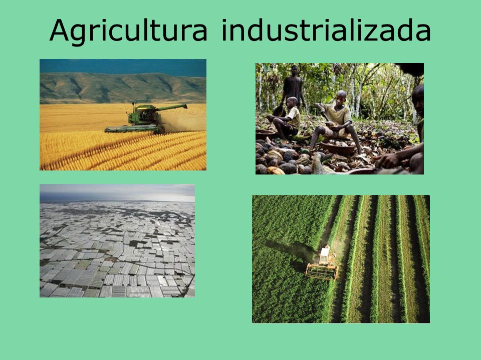 Agricultura industrializada