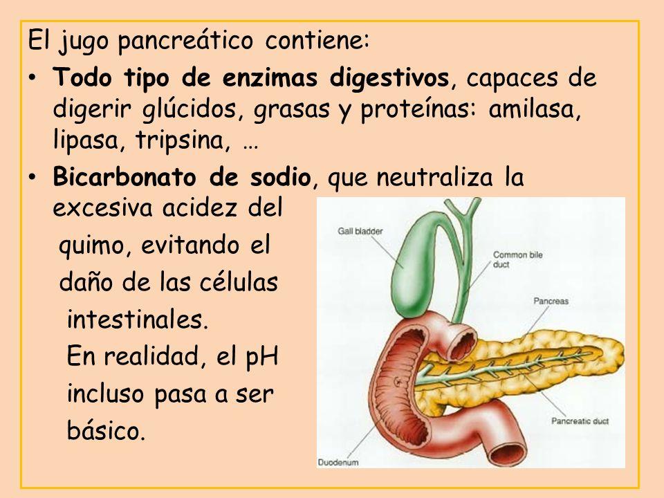 El jugo pancreático contiene: