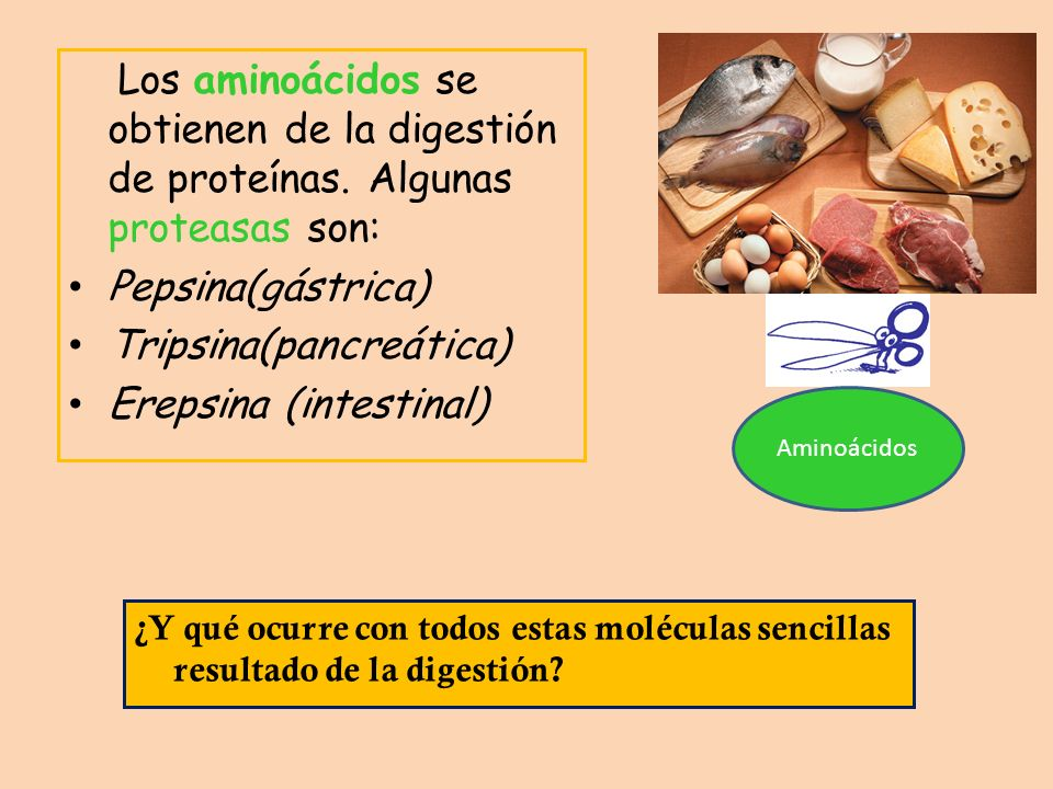 Tripsina(pancreática) Erepsina (intestinal)