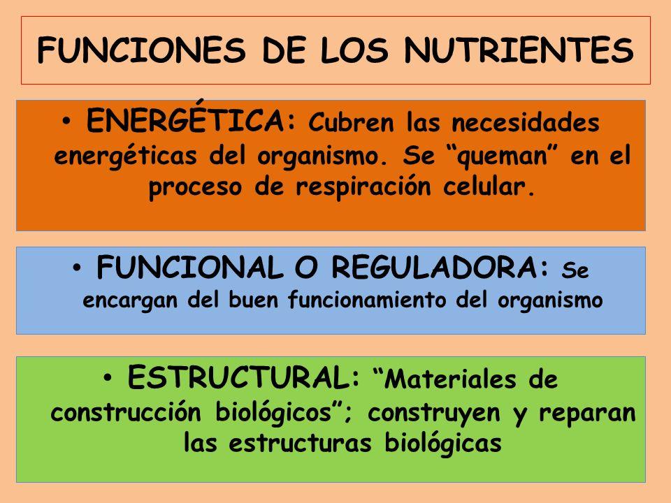 FUNCIONES DE LOS NUTRIENTES