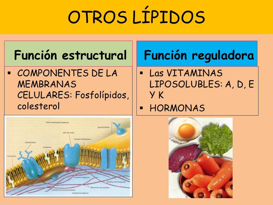 OTROS LÍPIDOS Función estructural Función reguladora