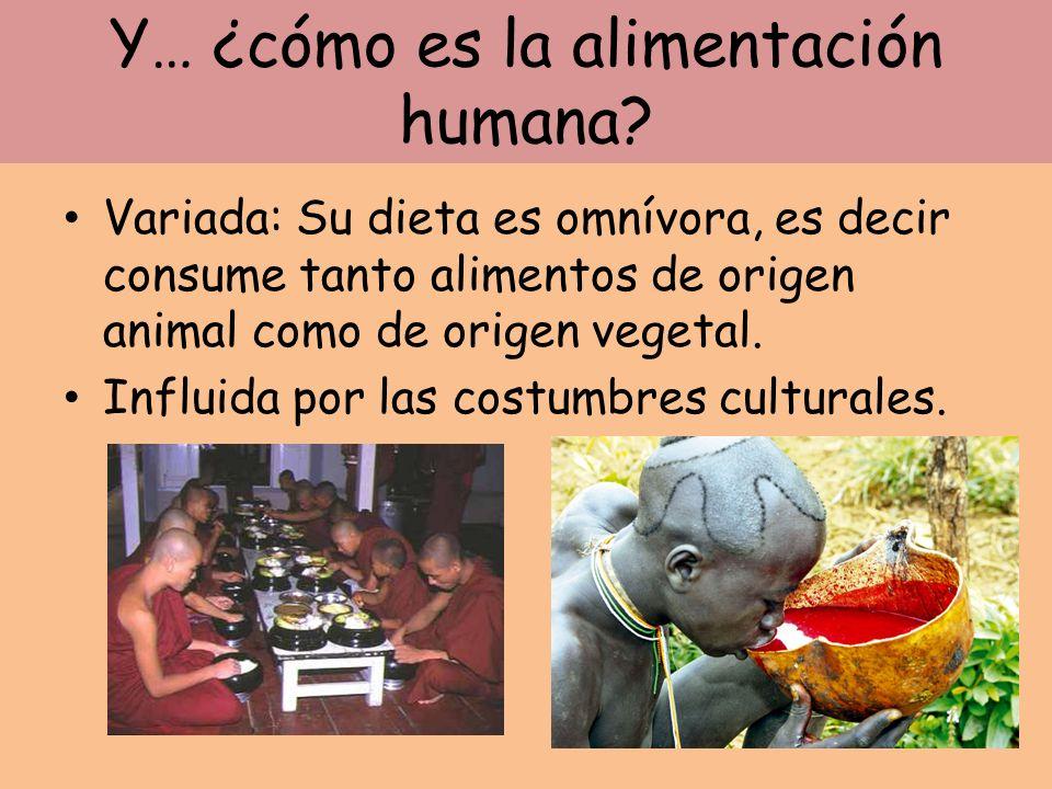 Y… ¿cómo es la alimentación humana