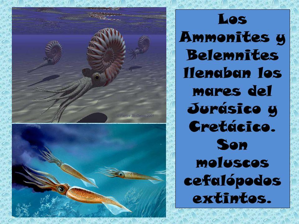 Los Ammonites y Belemnites llenaban los mares del Jurásico y Cretácico
