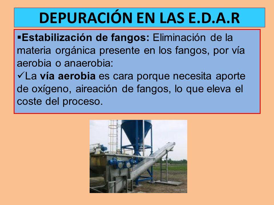 DEPURACIÓN EN LAS E.D.A.R Estabilización de fangos: Eliminación de la materia orgánica presente en los fangos, por vía aerobia o anaerobia: