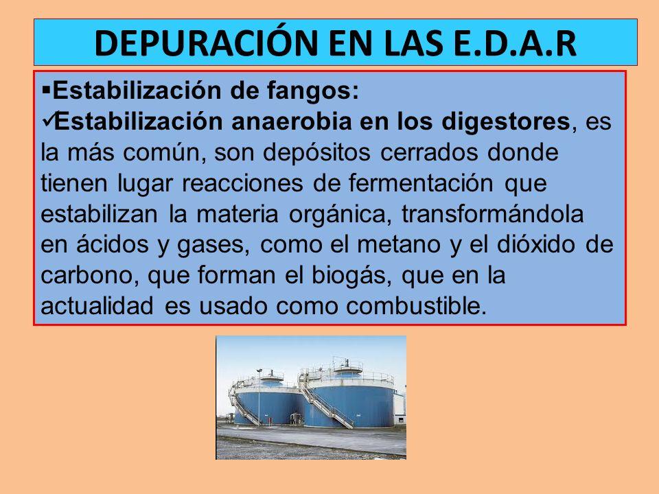 DEPURACIÓN EN LAS E.D.A.R Estabilización de fangos: